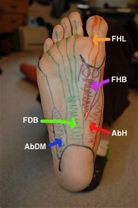When the muscles tighten (contract). 19 best FOOT FEET & TOES images on Pinterest   Reflexology ...