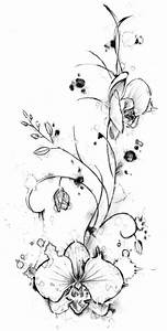 The gallery for --> Black Orchid Drawing