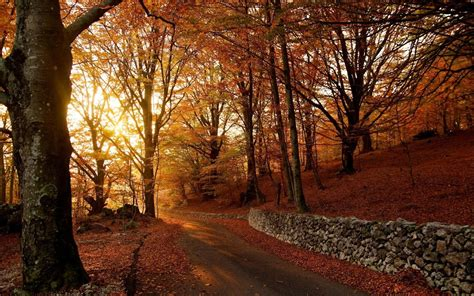 Android Hd Autumn Wallpapers by Autumn Wallpaper Android Apps On Play