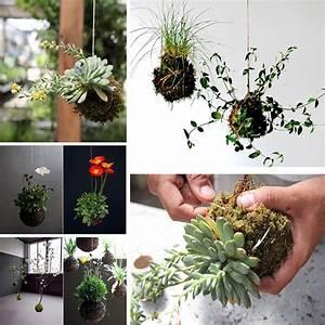 Hängende Pflanzen Aussen : die besten 25 h ngendes terrarium ideen auf pinterest h ngepflanzen kleine innenraumpflanzen ~ Sanjose-hotels-ca.com Haus und Dekorationen