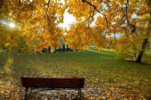 Herbst Im Garten Was Ist Zu Tun by Wohin Mit Dem Herbstlaub Der Garten Im Herbst Was Ist