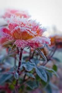 of frozen flowers xcitefun net