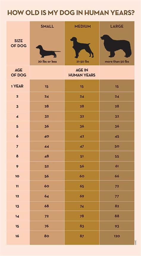 your s age in human years a conversion chart pets