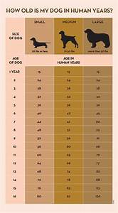 Your Dog U0026 39 S Age In Human Years  A Conversion Chart