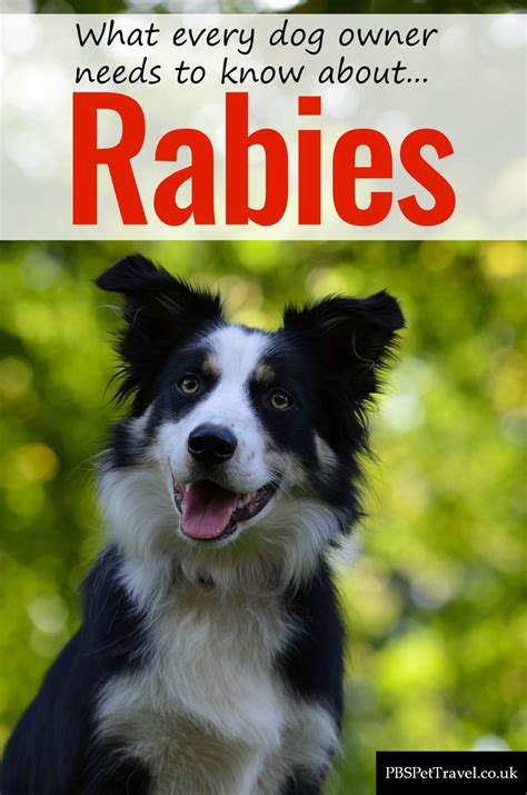 rabies  dogs pbs pet travel