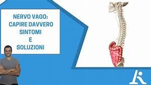 Nervo Vago  Sintomi Da  U0026quot Infiammazione U0026quot  E Soluzioni