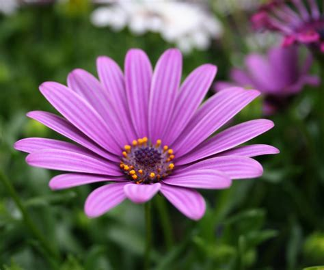 Comely Love Images Flowers Flower Image And Flowers Also