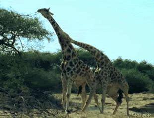 Amazing Animal Animated Gifs at Best Animations