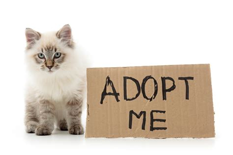 Cats For Adoption Did You Adopt A Cat Walkers More