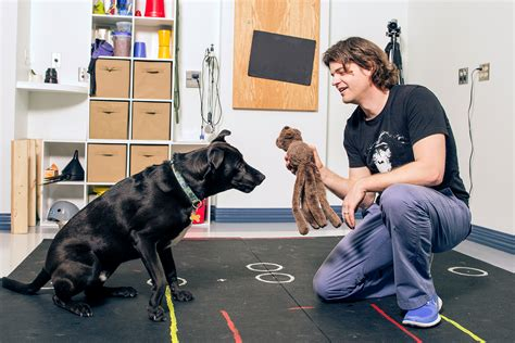 how smart is your test your pet s brain power for science wired