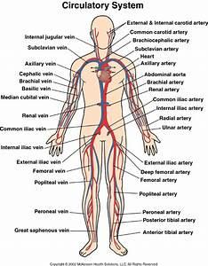 Veins Arteries Capillaries Diagram
