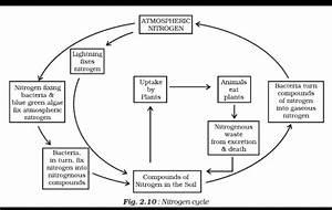 An Easy Diagram Of Nitrogen Cycle