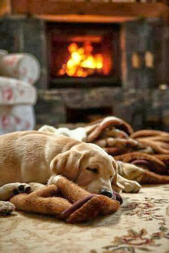dogs for fireplaces gif snow winter gifs starbucks autumn december cosy