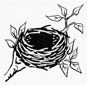 Birds Nest Photograph by Granger
