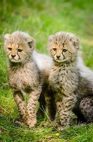 Cute Wild Animals Together