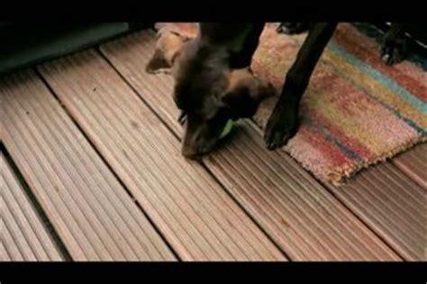 Video Hundespielzeug Selber Machen