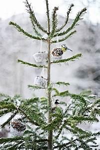 Vogelfutter Selbst Herstellen : unser christbaum steht jetzt auf dem balkon mit vogelfutter geschm ckt forsthof und arrenberg ~ Orissabook.com Haus und Dekorationen