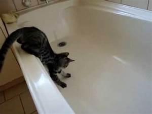 Video De Sexisme Dans Une Voiture : luna le chat qui tombe dans une baignoire betes de youtube ~ Medecine-chirurgie-esthetiques.com Avis de Voitures