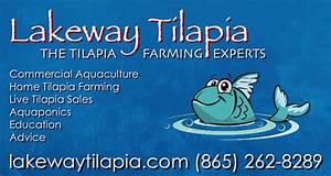 Backyard Tilapia Farming