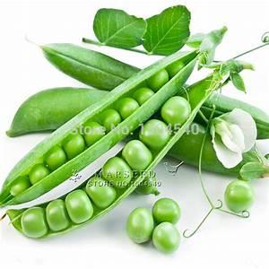 Plant Snow Peas Promotion-Shop for Promotional Plant Snow ...