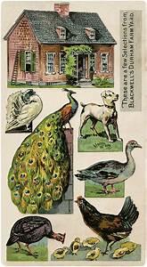 Fairy Garden Designs Cute Vintage Printable Farm Image The Graphics Fairy