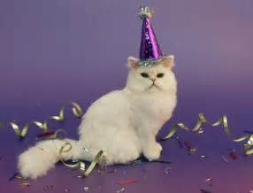 cat birthday birthday cat on