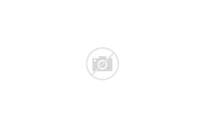 Flowers Petals Leaves Bright Colorful Patterns 4k