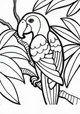 Coloring Parrot Printable Birds Tropical Pet Pdf Craft Branch sketch template