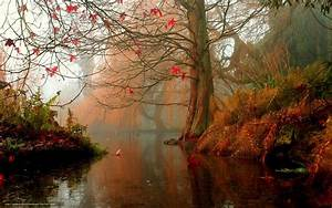 Autumn in the forest wallpaper