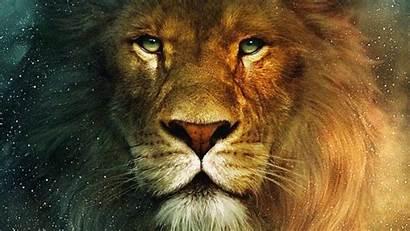 Aslan Narnia Lion Jesus Animais Wallpapers Winter