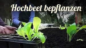 Hochbeet Blumen Bepflanzen : hochbeet bepflanzen mit jungpflanzen selbstversorgung youtube ~ Watch28wear.com Haus und Dekorationen