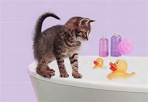 Laver Un Chaton : comment se d barrasser des puces chez un chaton ~ Nature-et-papiers.com Idées de Décoration