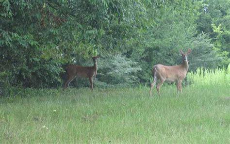 animal populations    natchez trace parkway