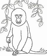 Baboon Coloring Mandrill Pages sketch template