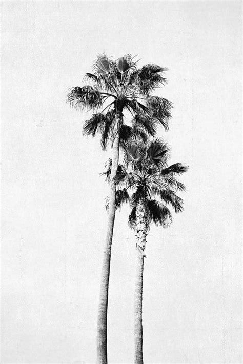 palm tree photograph vertical print black  white