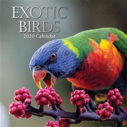Exotic Birds Calendar Animals Club Low Calendarclub