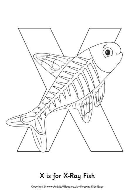 xray fish colouring page kid crafts fish