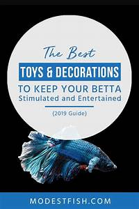 Best Toys  U0026 Decorations For Betta Fish Reviewed 2020 Guide