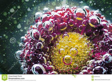 bloemen in afwasmiddel en water fotograferen studio die van rode gekleurde bloemen onder water wordt
