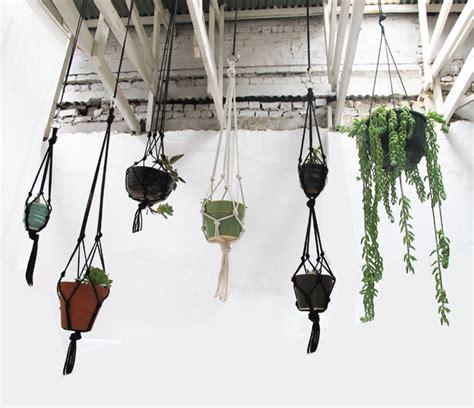 hanging succulent garden laminx