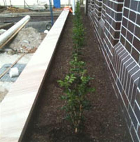 waterproofing concrete planters external waterproofing services sydney ponds pools