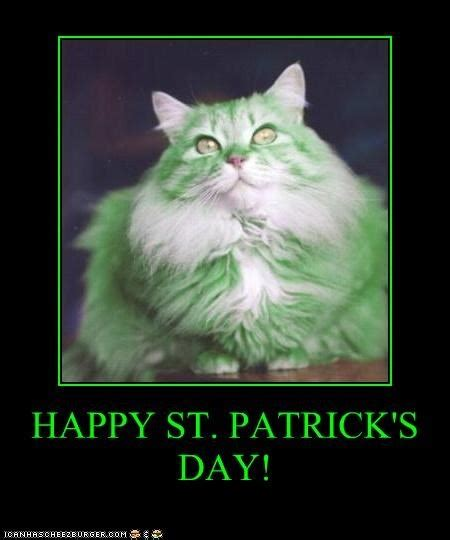 Happy St Patricks Day Meme - 451 best images about funny cats that aren t grumpy on pinterest