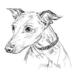 foto de Greyhound Vector Images (over 620)