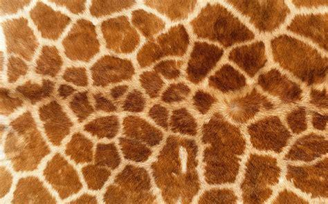 Animal Fur Wallpaper - animal print giraffes fur wallpapers hd desktop and