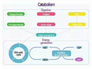 What Is Metabolism  What Are Some Examples