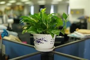 Feng Shui Schlafzimmer Pflanzen : pflanzen als wichtige motivationshelfer im b ro ~ Bigdaddyawards.com Haus und Dekorationen