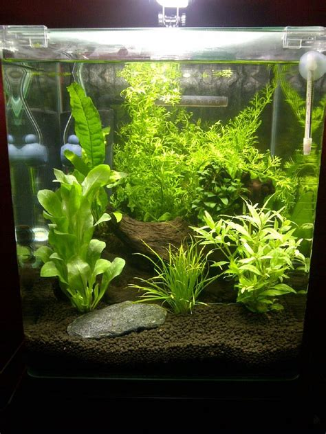 Fish For Aquascape - best 25 fish tank stand ideas on tank stand