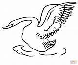Swan Coloring Drawing Taking Head Swans Printable Supercoloring Getdrawings Clipart Categories sketch template