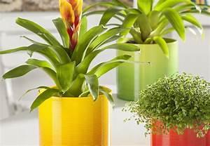 Große übertöpfe Für Zimmerpflanzen : bert pfe f r zimmerpflanzen obi ber t ~ Bigdaddyawards.com Haus und Dekorationen
