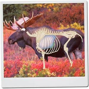 Moose Vitals Diagram